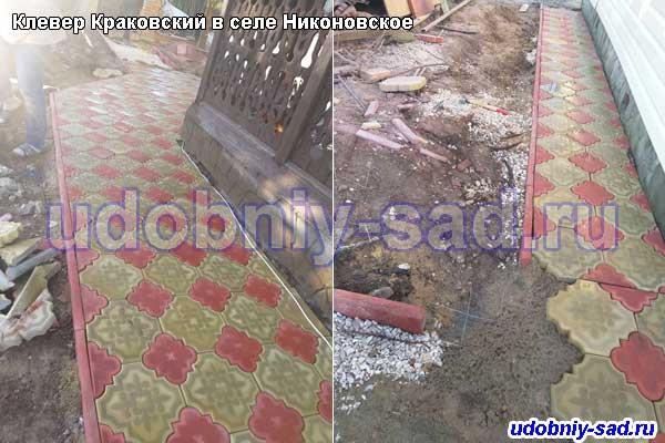 Клевер Краковский в селе Никоновское Раменского района Московской области