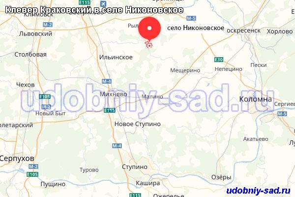 Клевер Краковский в селе Никоновское