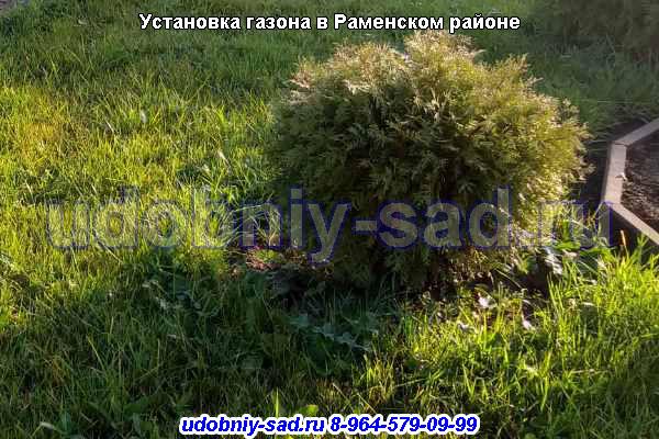 Установка газона в Раменском районе